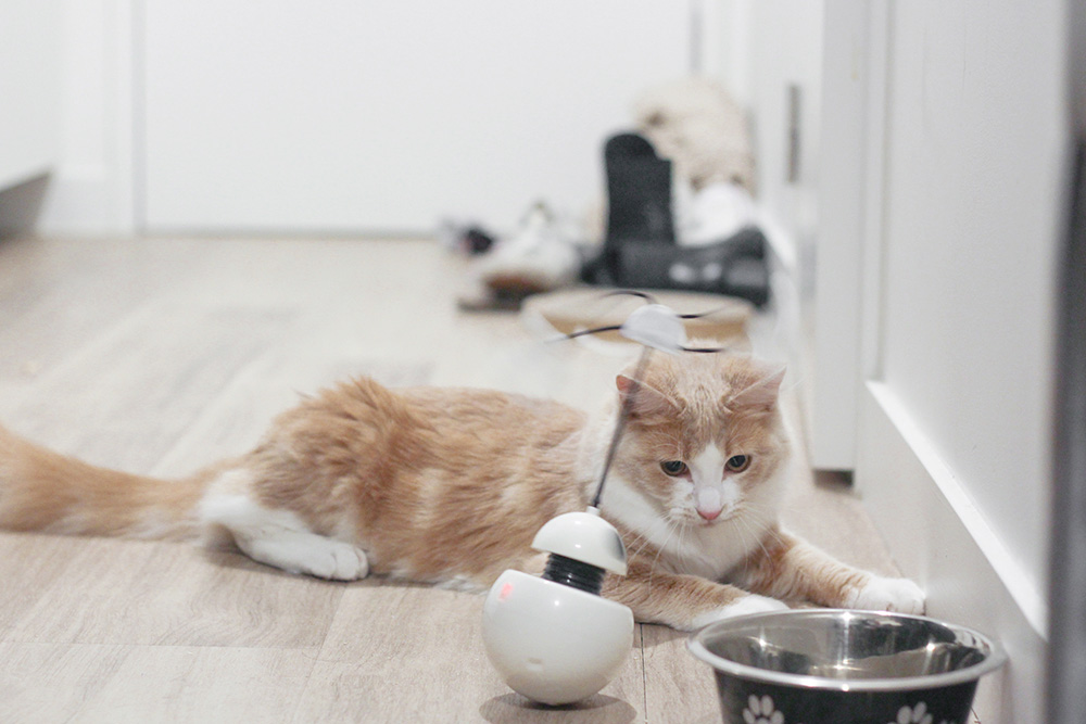 cat play robot toy