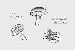 Do's and Don'ts of Mushroom Foraging